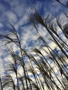 Grass and sky.sm