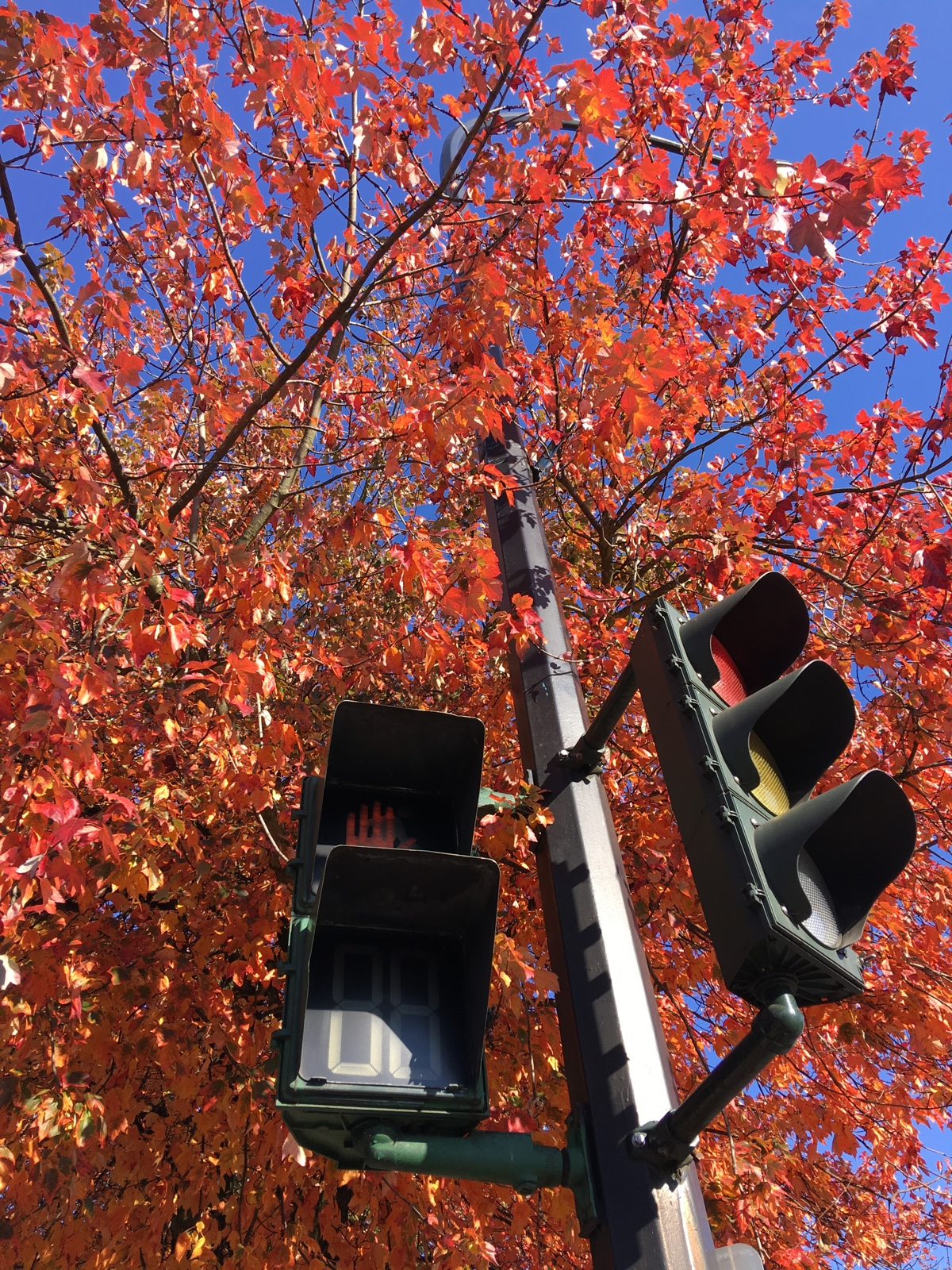 Trees and Traffic Light