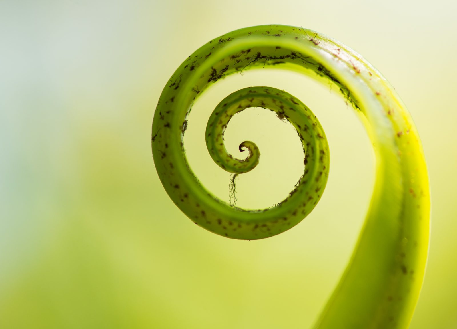 fern-awakening-4-small